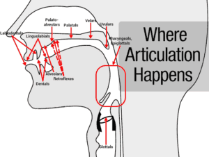 Where articulation happens